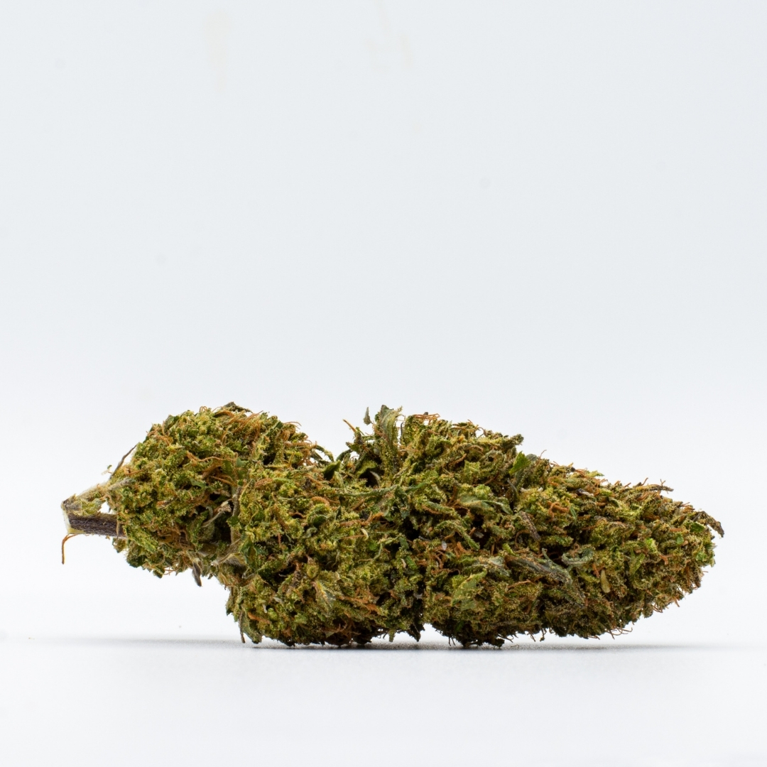 An ACDC hemp flower laying down on a white background